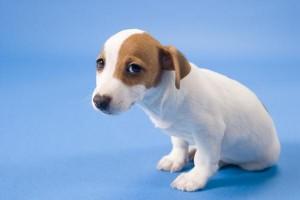 Parvovirus and Distemper-PetsGroomingPrices