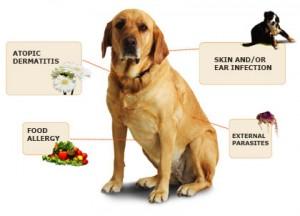 Skin Diseases-PetsGroomingPrices