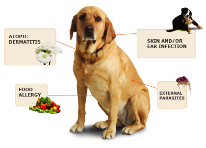 Can Dogs Get Grain Parasites From Food
