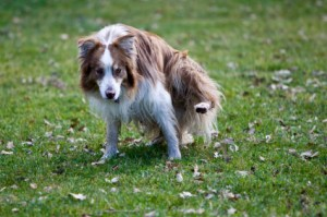 Urinary Tract Infections-PetsGroomingPrices