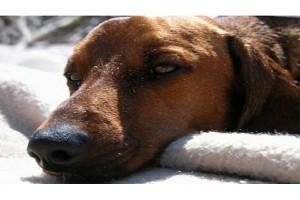 Vomiting and Diarrhea-PetsGroomingPrices