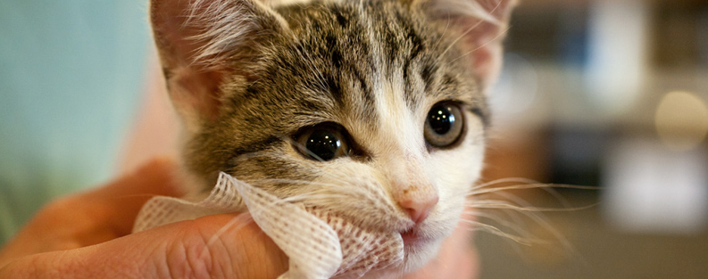 dental care and hygiene for cats   pets grooming prices