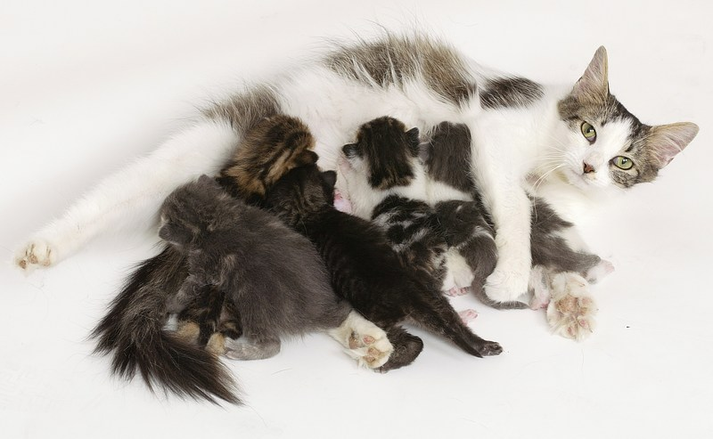 ways to care for your pregnant cat   pets grooming prices
