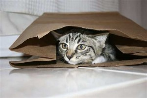 Why Cats Rule the World - They're entertained by paper bags