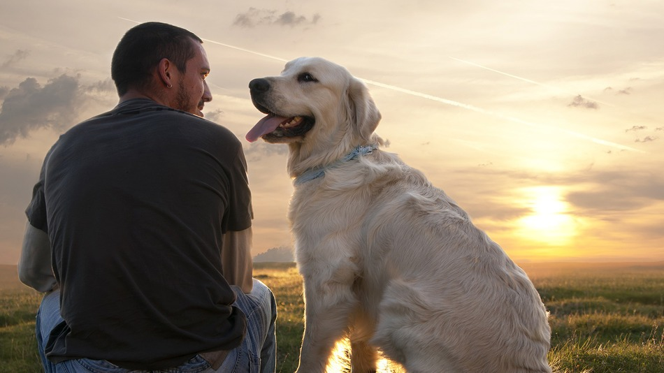 How to become the most loving pet owner pets grooming prices