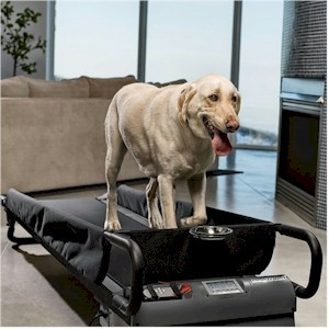 Can You Tie A Dog To A Treadmill
