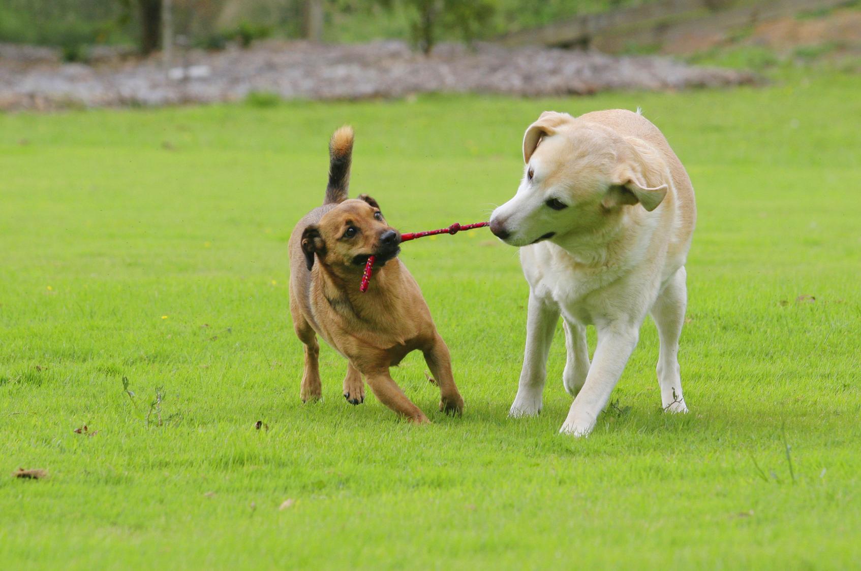 Good Toys For Older Dogs