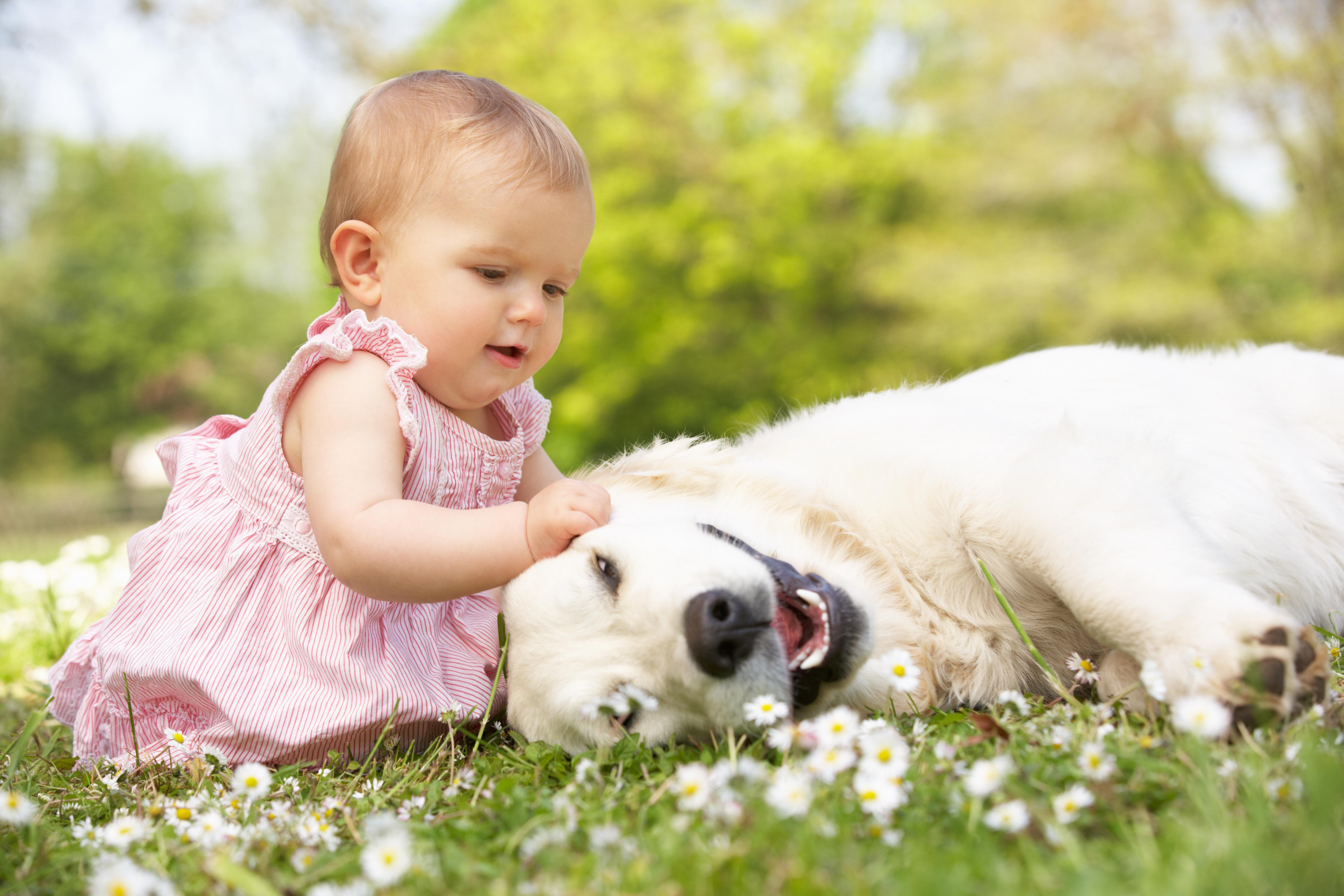 What are the benefits of kids and dogs growing up together pets grooming prices - Gardening for pets ...