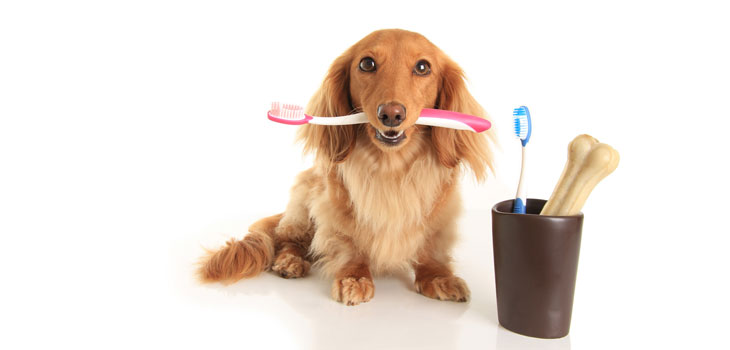 Dogs Value Dental Health Too! - Pets Grooming Prices