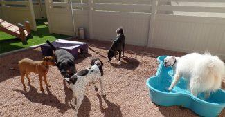 dog-kennels