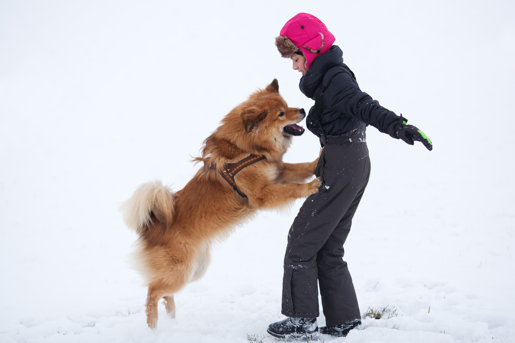 Addressing Your Dog S Jumping Problem Pets Grooming Prices