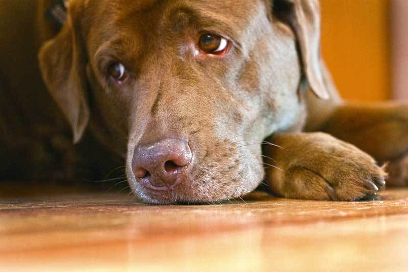 Do Dogs Get Depressed When You Leave
